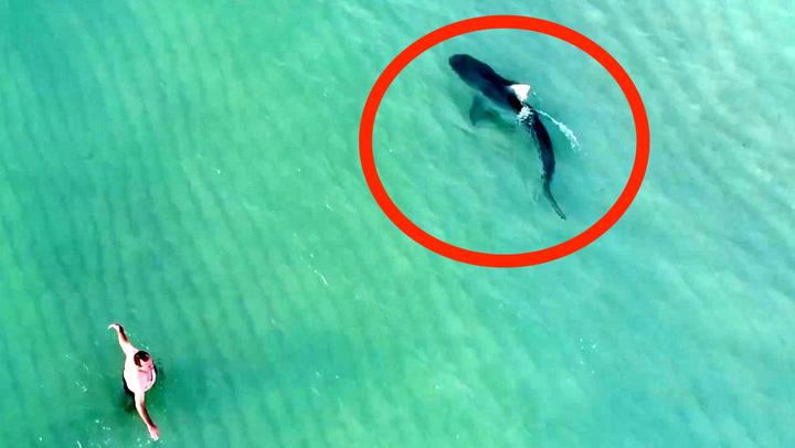 Badeturisten er meter fra farlig hai
