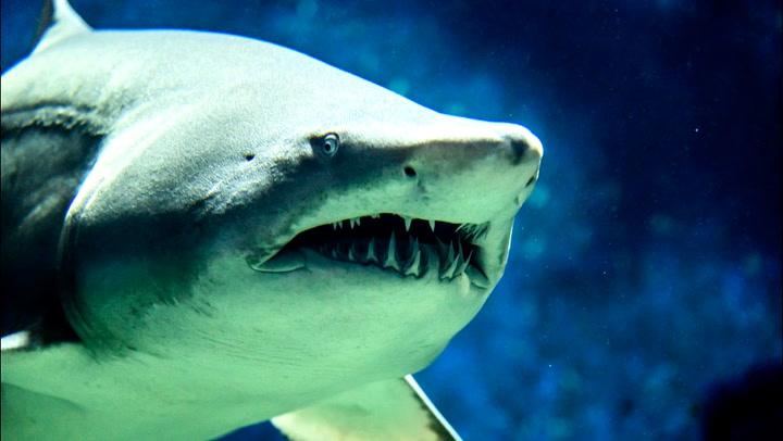 11 overraskende fakta om haier