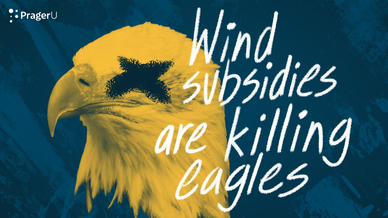 Wind Subsidies Are Killing Eagles