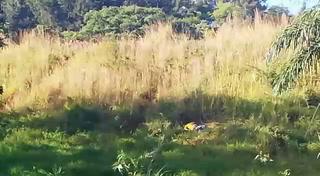 Encuentran cadáver cerca de la Villa Olímpica