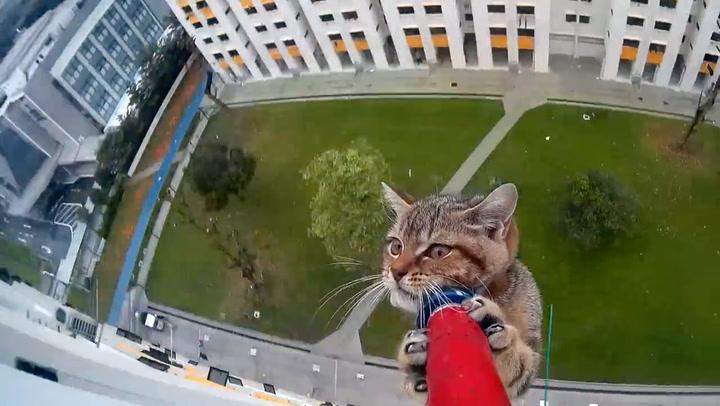 Livredd kattunge ble reddet på dramatisk vis