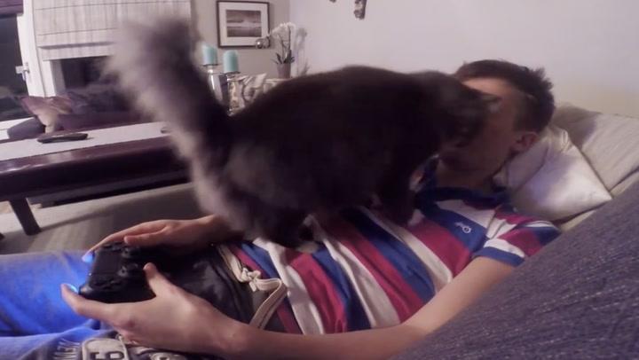 Katten nekter Alexander å spille tv-spill