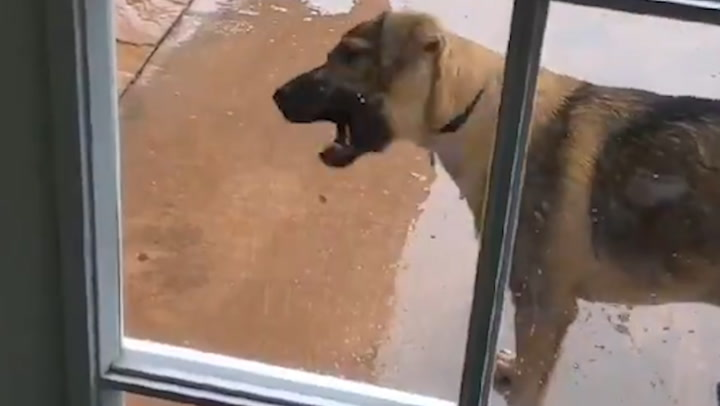 California dog experiences rain for the first time in his life