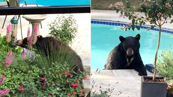 Fikk to bamse-besøk på én måned