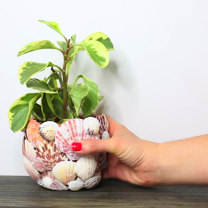 6 Unique Shell Decorations for Your Home This Summer
