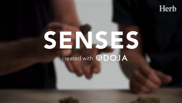 DOJA | Senses - Episode 1. Sight