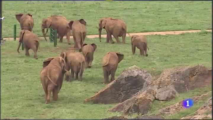 Muere tras ser golpeado por un elefante en el Parque de Cabárceno