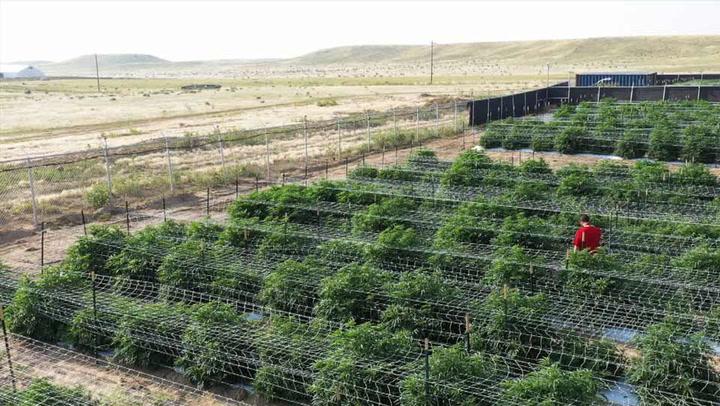 Schwazze: Creating the Next Era of Cannabis