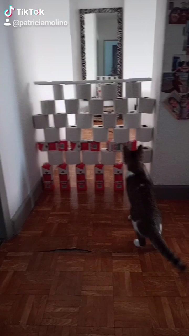 Reto Del Papel Higiénico Del Gato Misifú