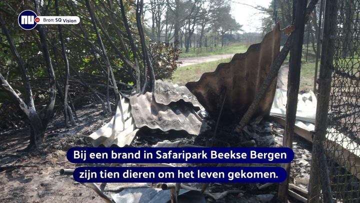 Tien dieren overleden door brand in Safaripark Beekse Bergen