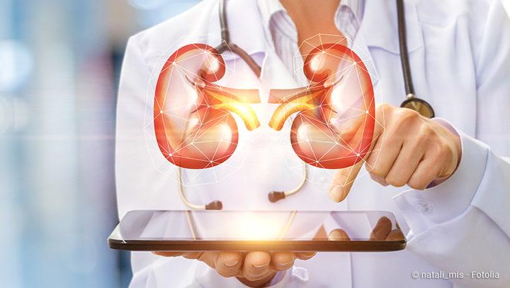 Nieren: Anatomie und wichtige Erkrankungen - NetDoktor
