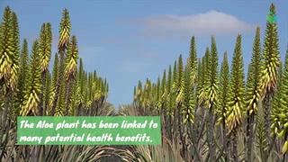 6 Health Benefits Of Aloe
