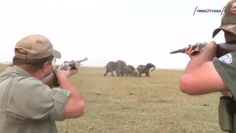Elefantes enfrentan a cazadores que mataron al líder de la manada