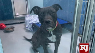 Animal Foundation launches foster a dog over Thanksgiving program