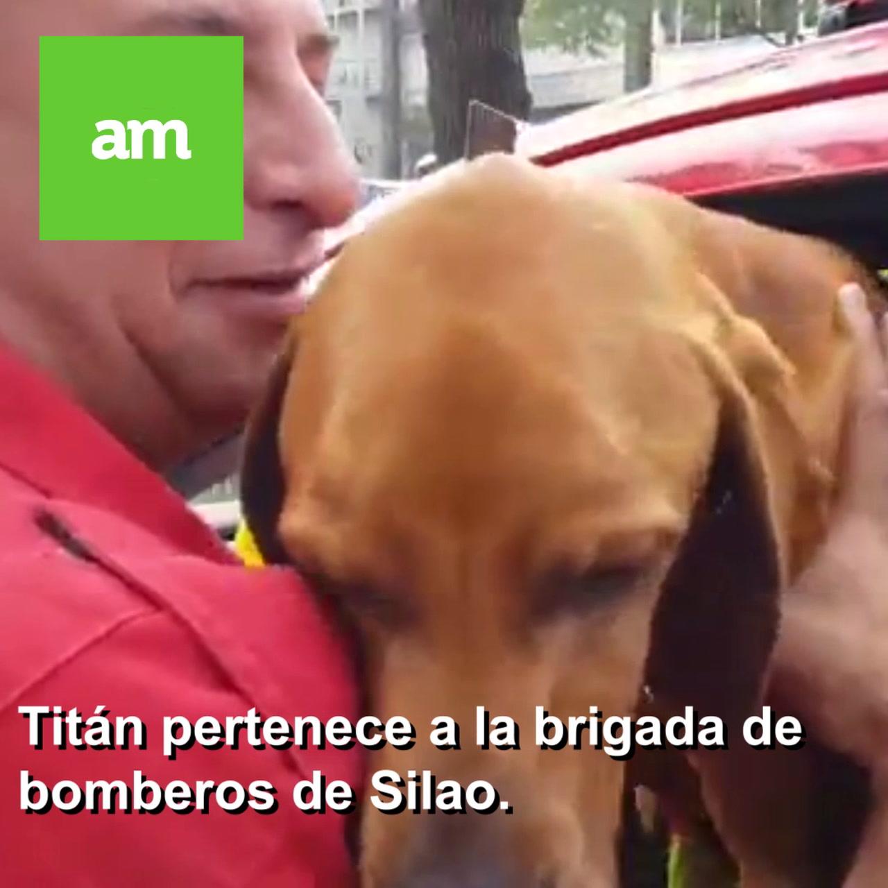 #PerrosRescatistas