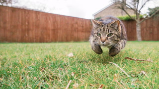 How to Keep the Cats Away So You Can Play in Your Own Yard