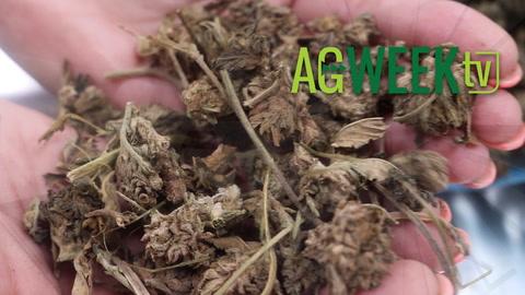 Agweek TV: Planting Updates in IA, SD, MN, ND, CBD Oil, Biodiesel Health Benefits, Tax Plan Reaction, Saline Soils