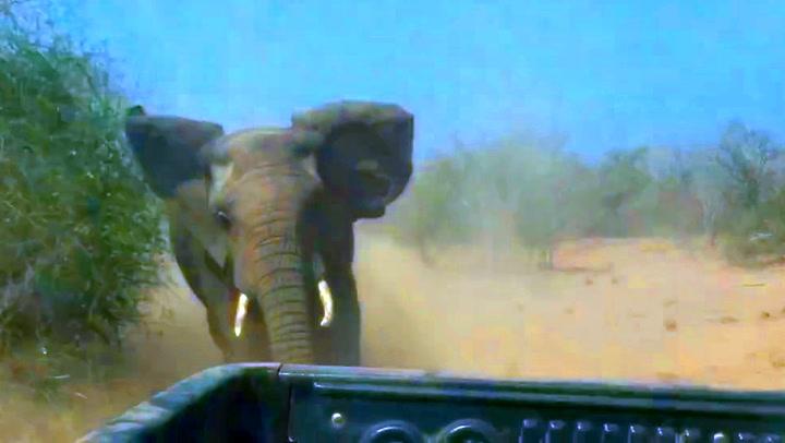 Turistene skulle aldri trosset elefantenes advarsler