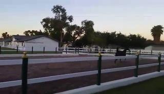 Wayne's Arabian Horse