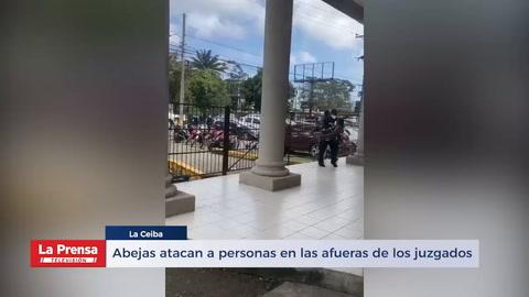 Abejas atacan a personas en las afueras de los juzgados ceibeños