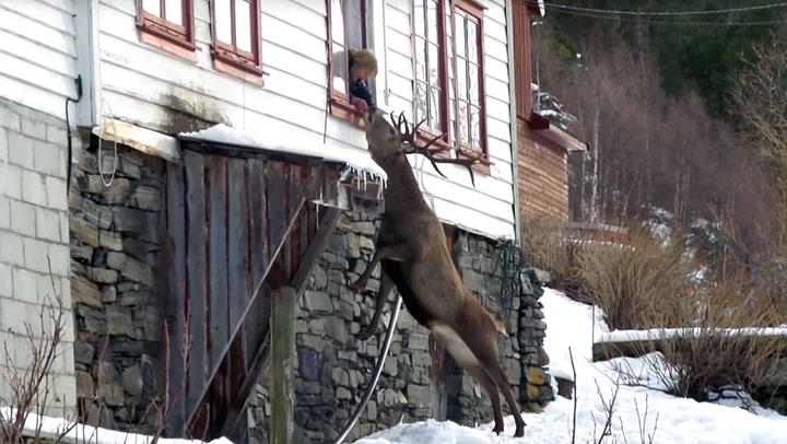 Mette (81) og hjorten har et unikt vennskap