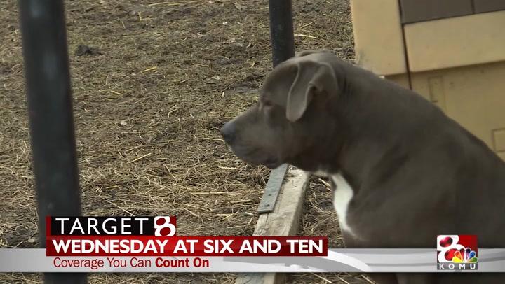 Target 8 Investigation: Callaway Hills Animal Shelter