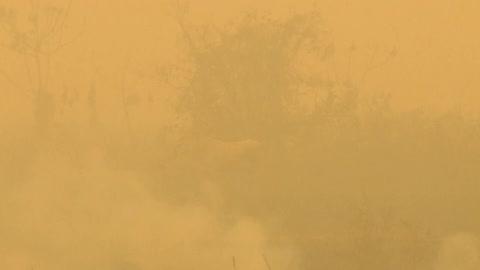 ¿Cómo prevenir nuevos desastres en el Pantanal?