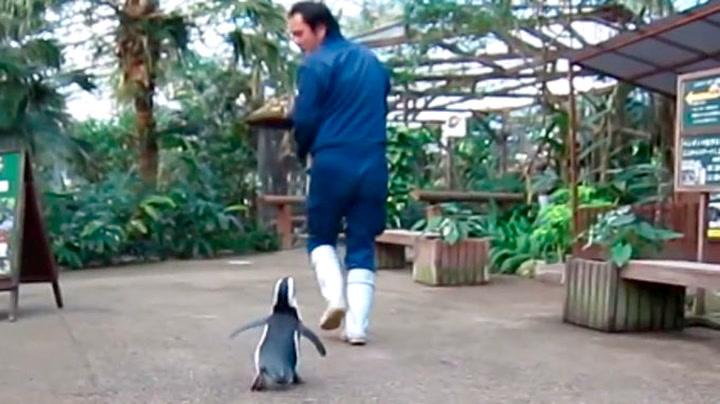 Pingvin jager mann