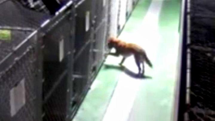Hundemor brøt seg ut av buret for å trøste «gråtende» valper