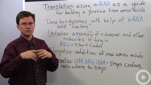 Biology Translation