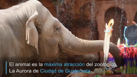 El festejo por los 59 años de la elefanta Trompita en Guatemala