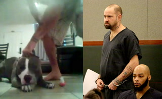 Man who beat dog and made death threats gets 5 to 13 years