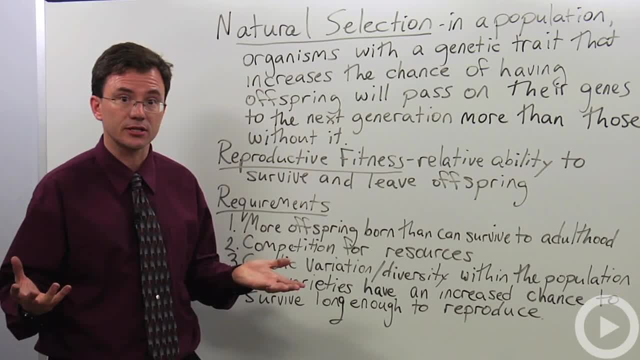 natural selection biology video by brightstorm