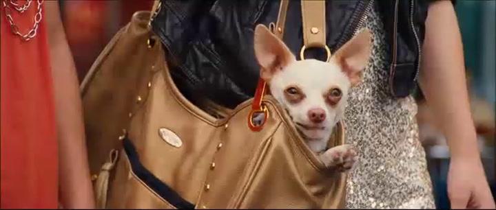 Scene - Canine Accessory