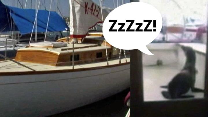 Michael våknet av snorking – ble møtt av dette synet!