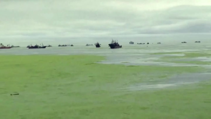 China's green tide: possibly the most disgusting thing you'll see today