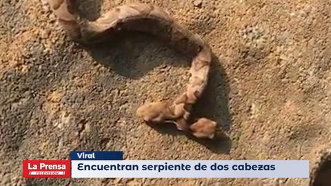 Encuentran serpiente de dos cabezas