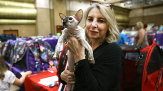 Cats owners compete for top show awards