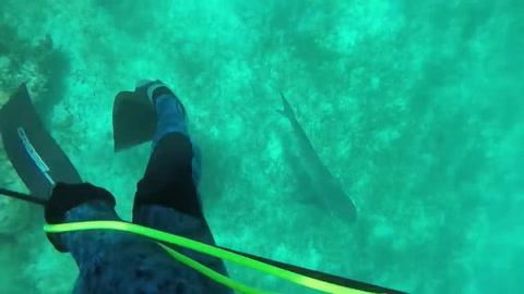 Un buzo fue mordido en la cabeza por un tiburón y vivió para contarlo