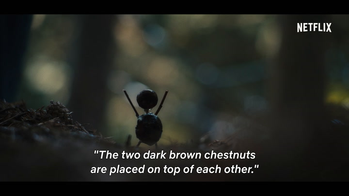 About the Chestnut Man