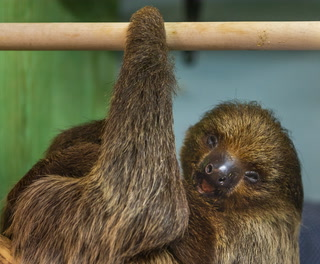 Flash The Sloth debut at Sea-Quest