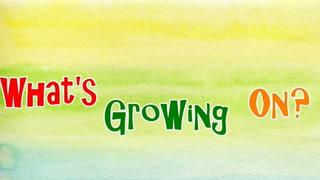 Grow Room & Plant Update Oct 20 2019