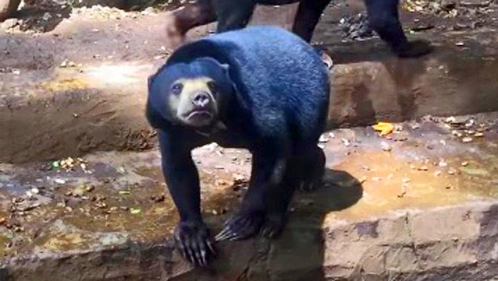 Hjerteskjærende: Utsultede bjørner trygler om mat