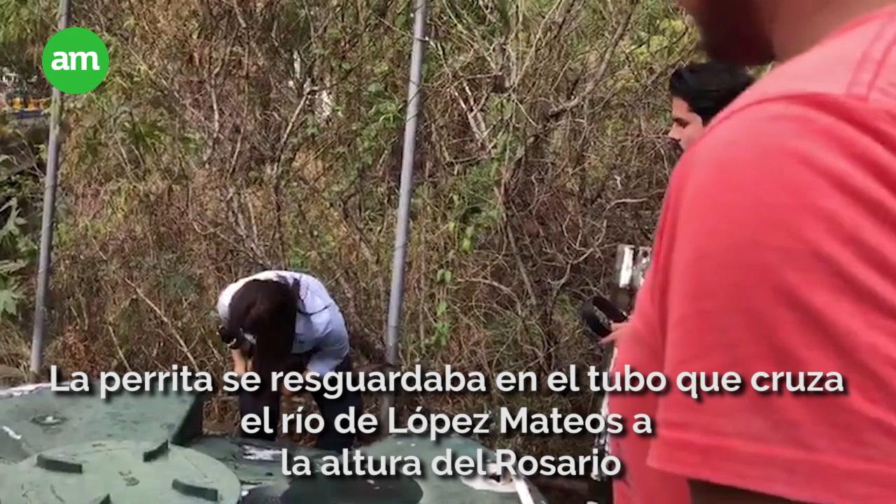 Video: Activista panista rescató a perrita