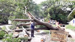 Se reporta la caída de postes y árboles en Las Flores, hacia Olancho