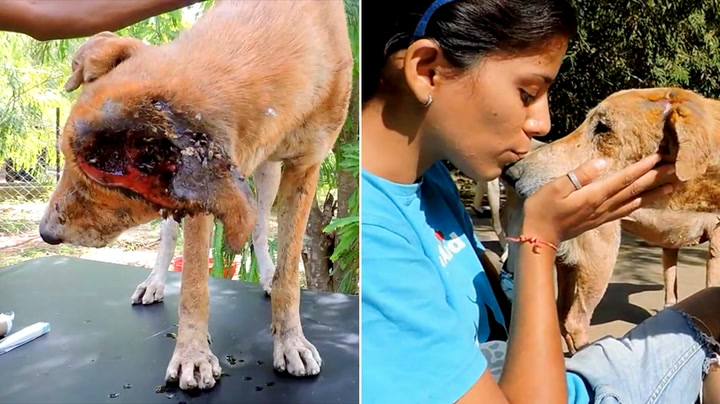 Hardt såret gjemte gatehunden seg for å dø alene