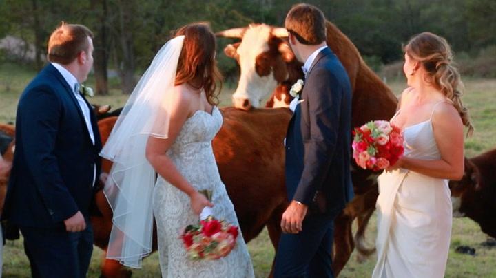 Kåt okse satte bruden i skyggen