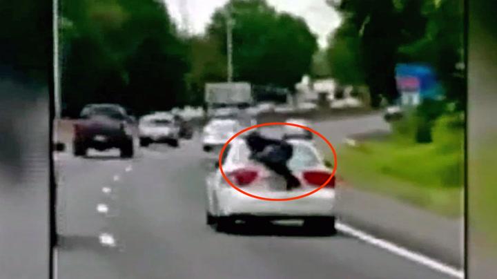 Hang seg fast på bagasjelokket på motorveien