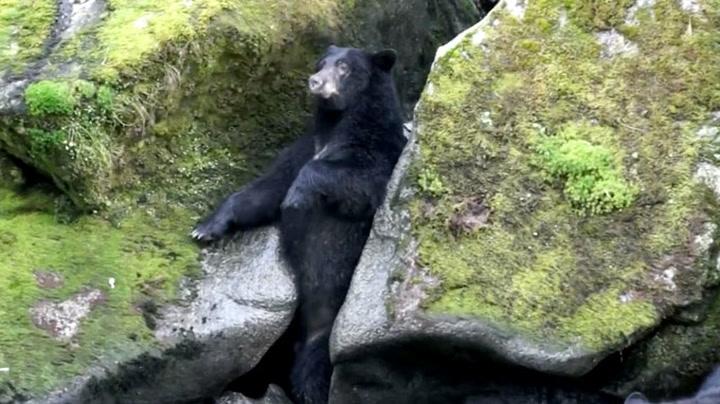 En skikkelig bjørne-knipe