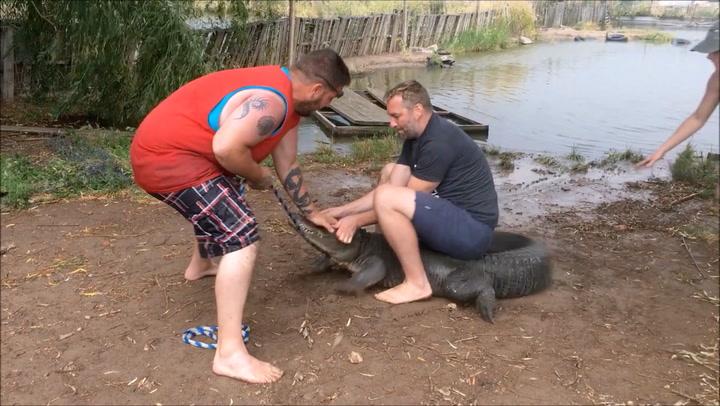 Alligator ville ikke bli tatt bilde av - bet av turistens tommel
